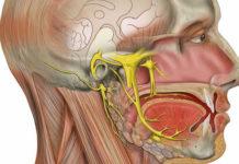 Head and neck anatomy platform