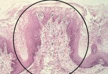 Oral Histology platform